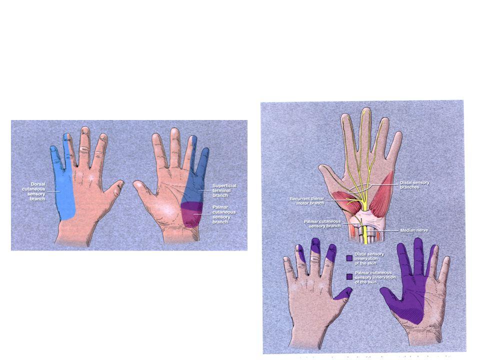 Tratamento Descartada patologia, tratar como dor neuropática 1.