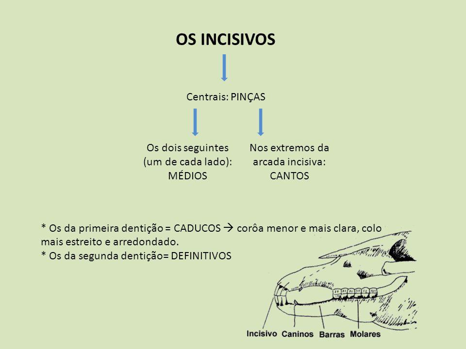 OS INCISIVOS Centrais: PINÇAS Os dois seguintes (um de cada lado): MÉDIOS Nos extremos da arcada incisiva: CANTOS * Os da primeira dentição = CADUCOS