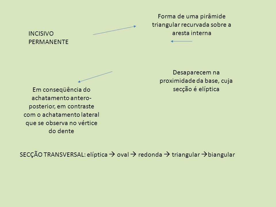INCISIVO PERMANENTE Forma de uma pirâmide triangular recurvada sobre a aresta interna Desaparecem na proximidade da base, cuja secção é elíptica Em co