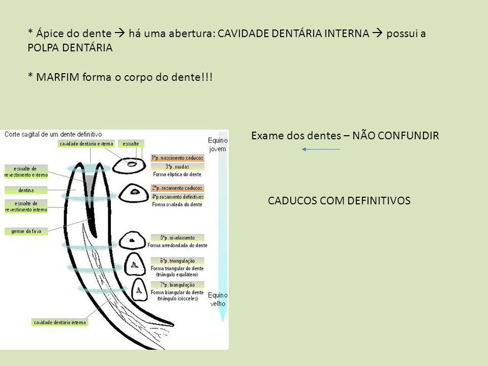 * Ápice do dente  há uma abertura: CAVIDADE DENTÁRIA INTERNA  possui a POLPA DENTÁRIA * MARFIM forma o corpo do dente!!! Exame dos dentes – NÃO CONF