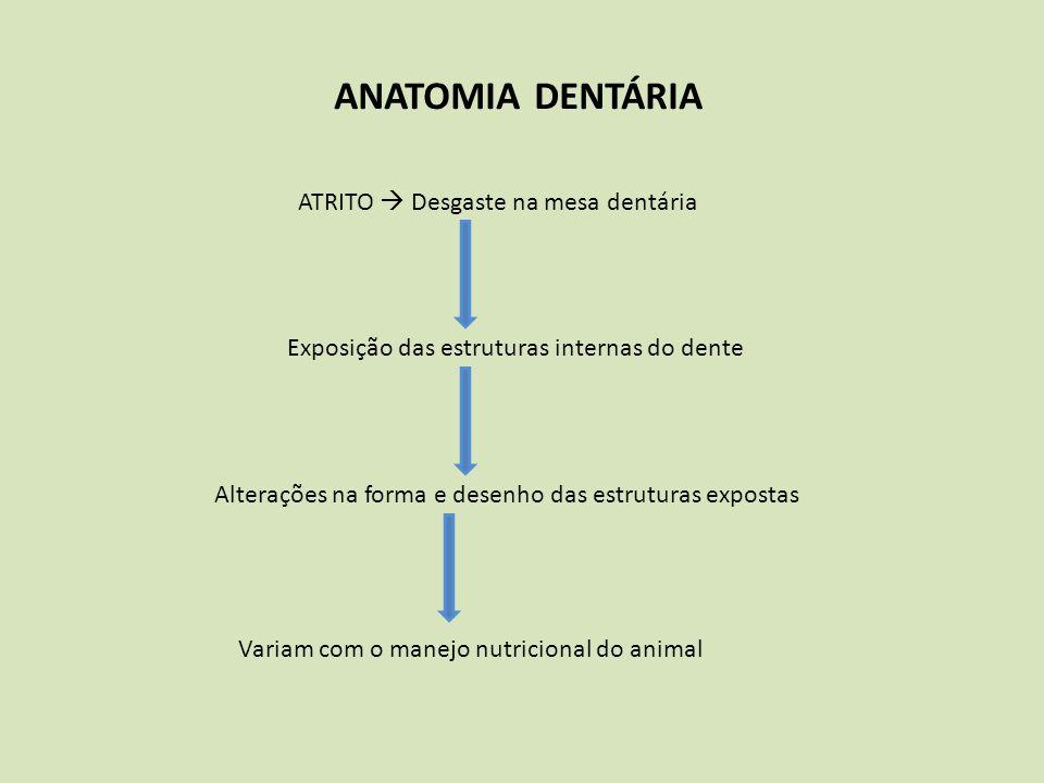 ANATOMIA DENTÁRIA ATRITO  Desgaste na mesa dentária Exposição das estruturas internas do dente Alterações na forma e desenho das estruturas expostas