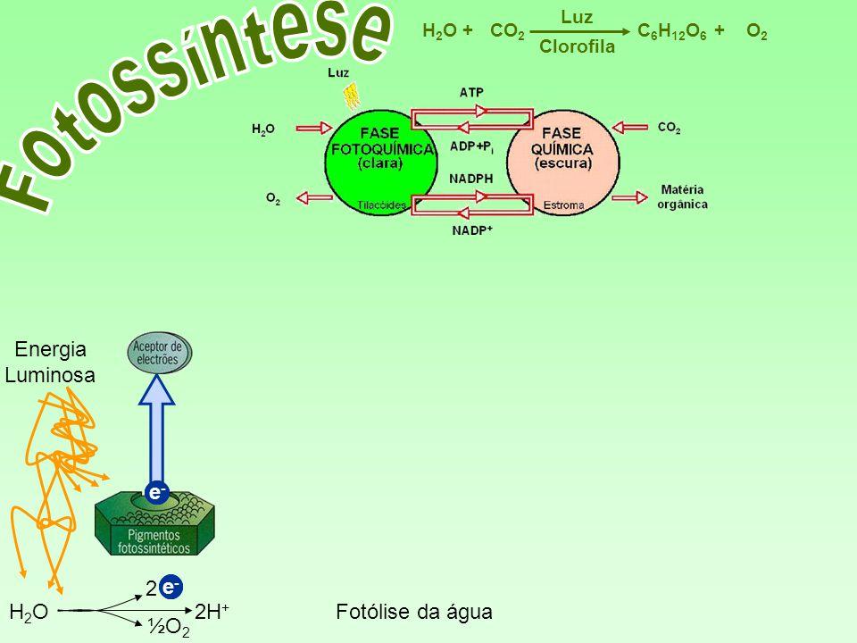 e-e- C 6 H 12 O 6 CO 2 H2OH2OO2O2 Luz ++ Clorofila Energia Luminosa H2OH2O 2 ½O 2 2H + Fotólise da água e-e- e-e- e-e- e-e-
