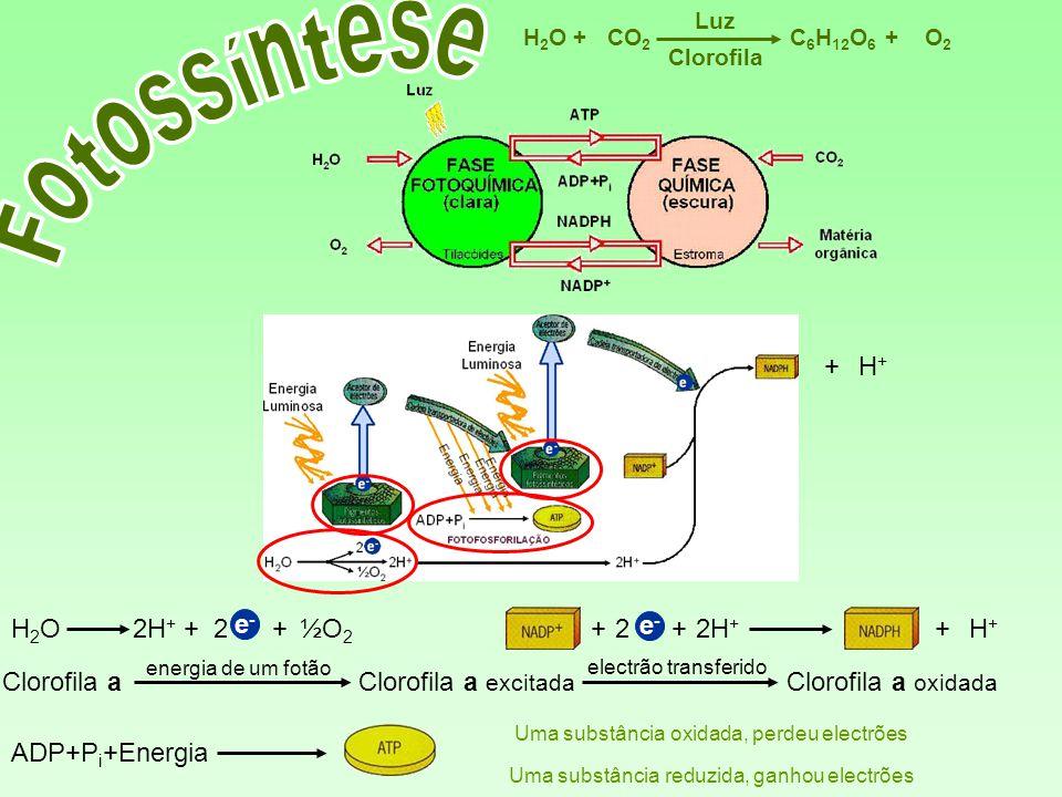 C 6 H 12 O 6 CO 2 H2OH2OO2O2 Luz ++ Clorofila 2H + e-e- +2+H+H+ + H+H+ + H 2 O2½O 2 2H + e - ++ Clorofila a energia de um fotão Clorofila a excitada e