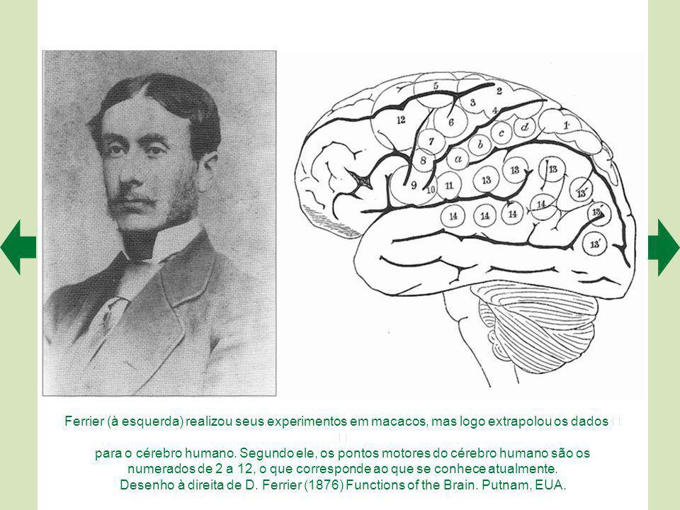 As áreas motoras corticais estão representadas em tons de azul.