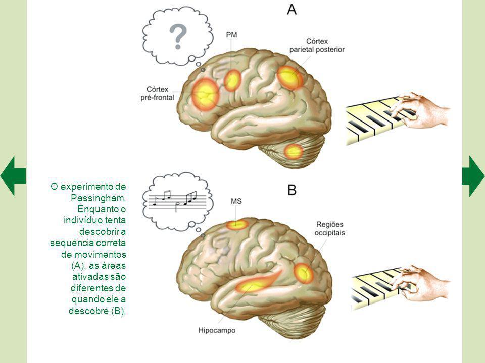 Planejamento e comando motor envolvem áreas diferentes do córtex cerebral.