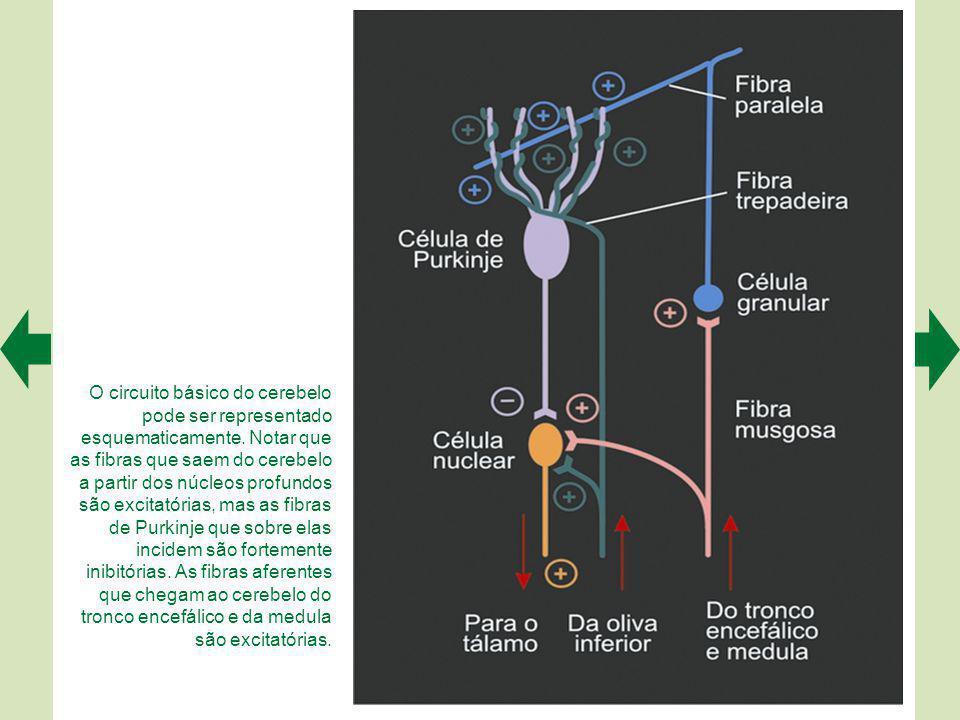 Uma pequena fatia do córtex cerebelar (detalhe acima, à esquerda) é representativa de todas as regiões.