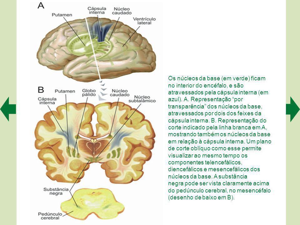 O circuito básico do cerebelo pode ser representado esquematicamente.