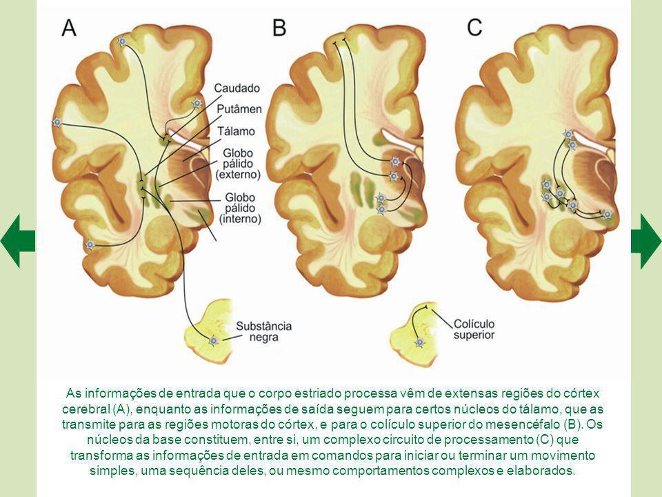 Os núcleos da base (em verde) ficam no interior do encéfalo, e são atravessados pela cápsula interna (em azul).