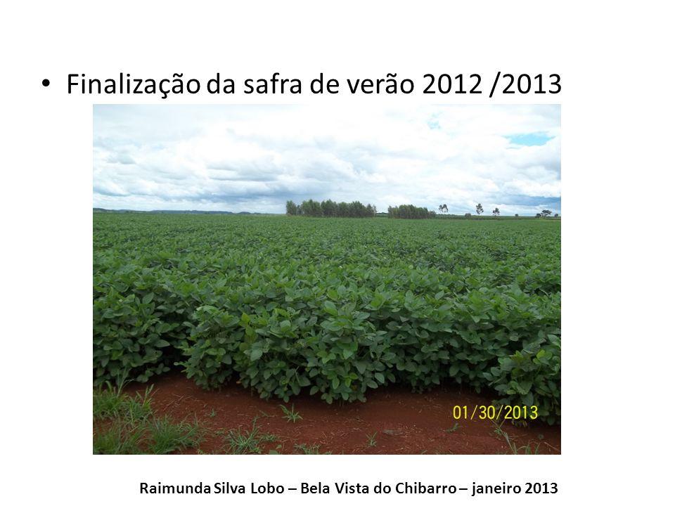 Finalização da safra de verão 2012 /2013 Raimunda Silva Lobo – Bela Vista do Chibarro – janeiro 2013