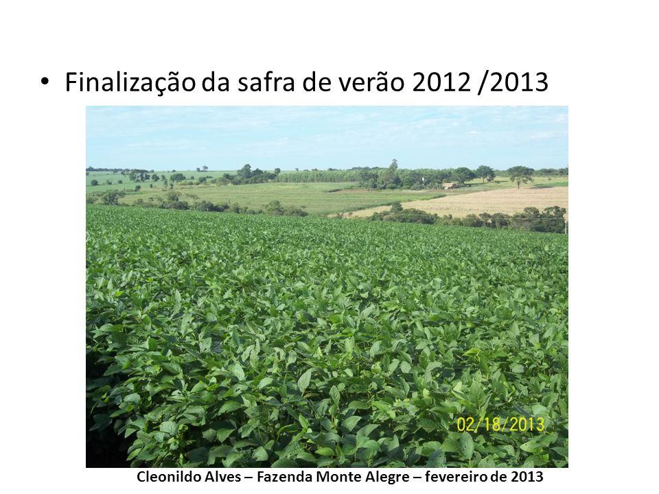 Finalização da safra de verão 2012 /2013 Cleonildo Alves – Fazenda Monte Alegre – fevereiro de 2013