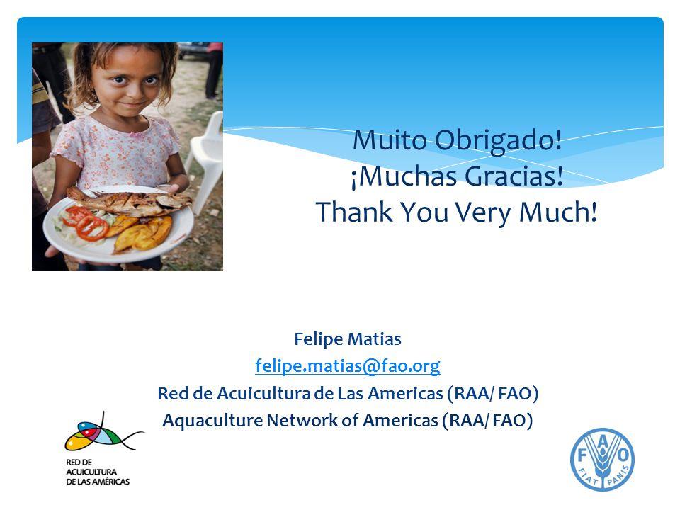 Felipe Matias felipe.matias@fao.org Red de Acuicultura de Las Americas (RAA/ FAO) Aquaculture Network of Americas (RAA/ FAO) Muito Obrigado! ¡Muchas G