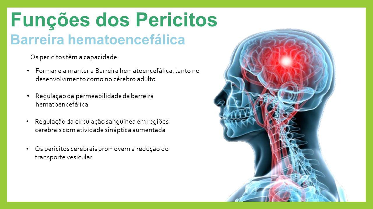 Funções dos Pericitos Barreira hematoencefálica Os pericitos cerebrais promovem a redução do transporte vesicular. Os pericitos têm a capacidade: Regu