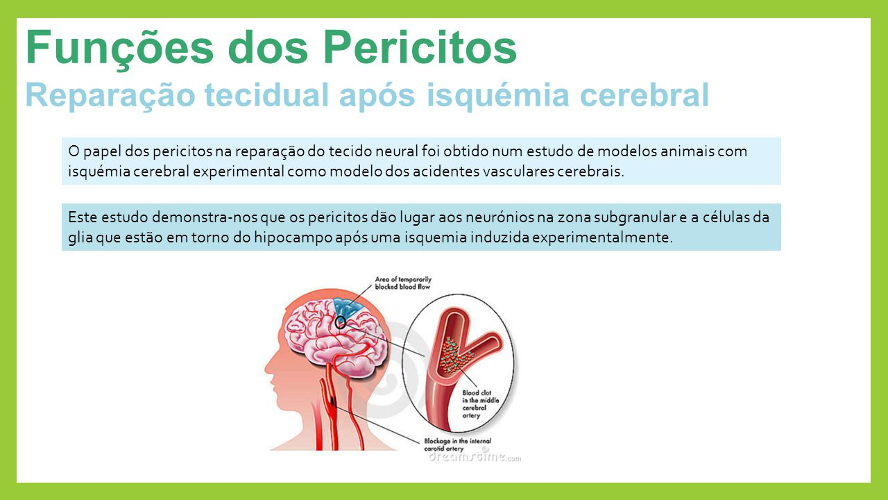 Funções dos Pericitos Reparação tecidual após isquémia cerebral Este estudo demonstra-nos que os pericitos dão lugar aos neurónios na zona subgranular