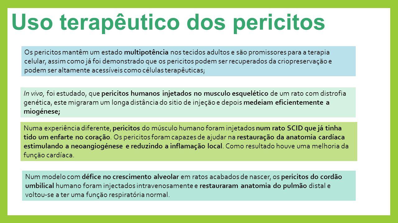 Uso terapêutico dos pericitos Os pericitos mantêm um estado multipotência nos tecidos adultos e são promissores para a terapia celular, assim como já