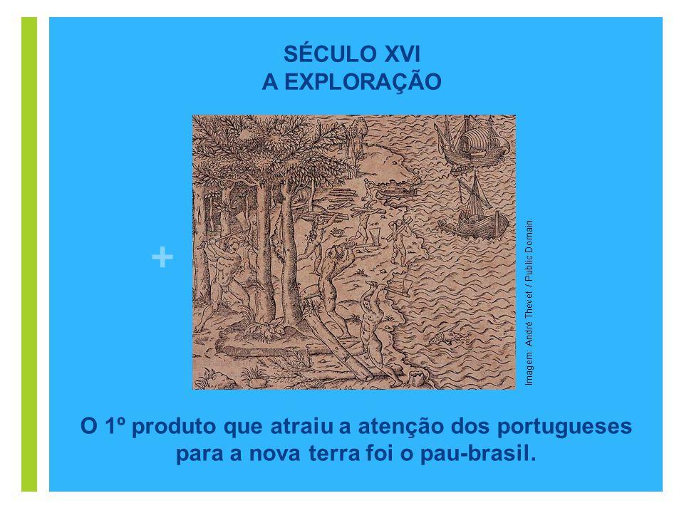+ O 1º produto que atraiu a atenção dos portugueses para a nova terra foi o pau-brasil. Imagem: André Thevet / Public Domain. SÉCULO XVI A EXPLORAÇÃO