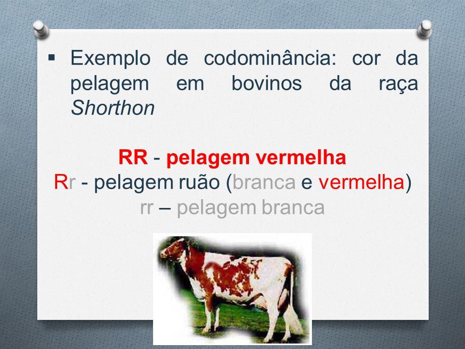  Exemplo de codominância: cor da pelagem em bovinos da raça Shorthon RR - pelagem vermelha Rr - pelagem ruão (branca e vermelha) rr – pelagem branca
