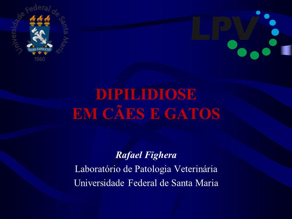 DIPILIDIOSE EM CÃES E GATOS Rafael Fighera Laboratório de Patologia Veterinária Universidade Federal de Santa Maria
