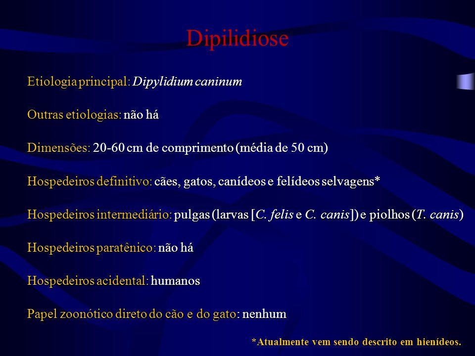 Dipilidiose Etiologia principal: Dipylidium caninum Outras etiologias: não há Dimensões: 20-60 cm de comprimento (média de 50 cm) Hospedeiros definitivo: cães, gatos, canídeos e felídeos selvagens Hospedeiros intermediário: pulgas (larvas [C.
