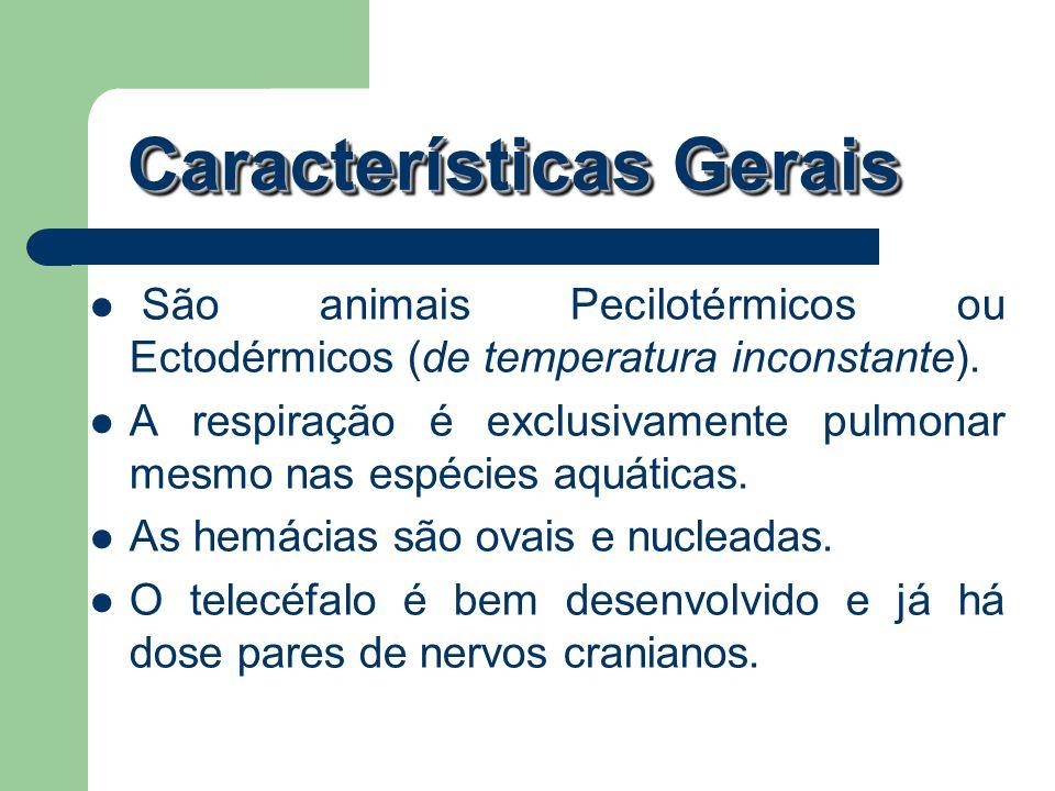 São animais Pecilotérmicos ou Ectodérmicos (de temperatura inconstante). A respiração é exclusivamente pulmonar mesmo nas espécies aquáticas. As hemác