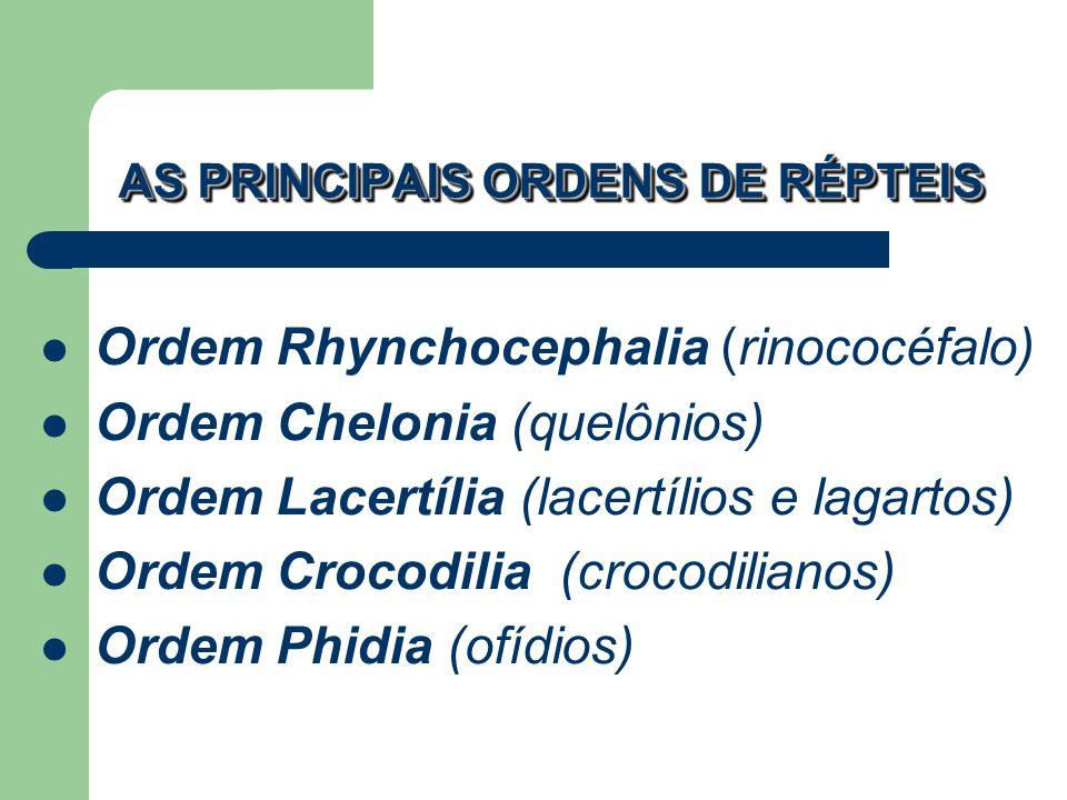 AS PRINCIPAIS ORDENS DE RÉPTEIS Ordem Rhynchocephalia (rinococéfalo) Ordem Chelonia (quelônios) Ordem Lacertília (lacertílios e lagartos) Ordem Crocod