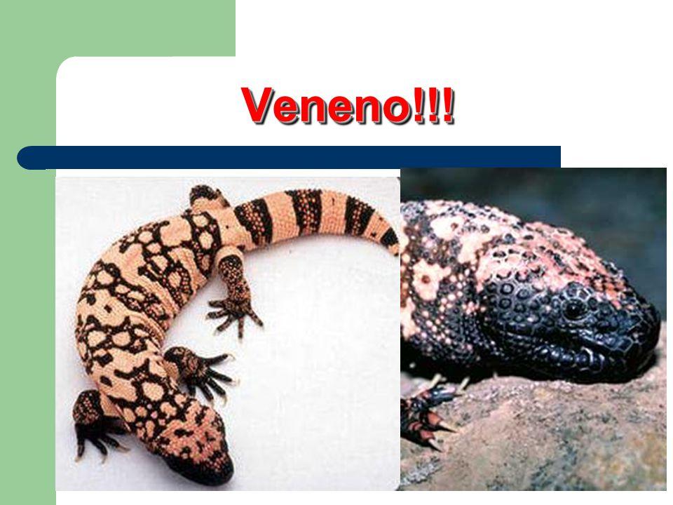 Ordem Crocodilia (crocodilianos) crocodilos e jacarés EX: crocodilos e jacarés