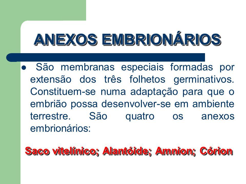 ANEXOS EMBRIONÁRIOS São membranas especiais formadas por extensão dos três folhetos germinativos. Constituem-se numa adaptação para que o embrião poss
