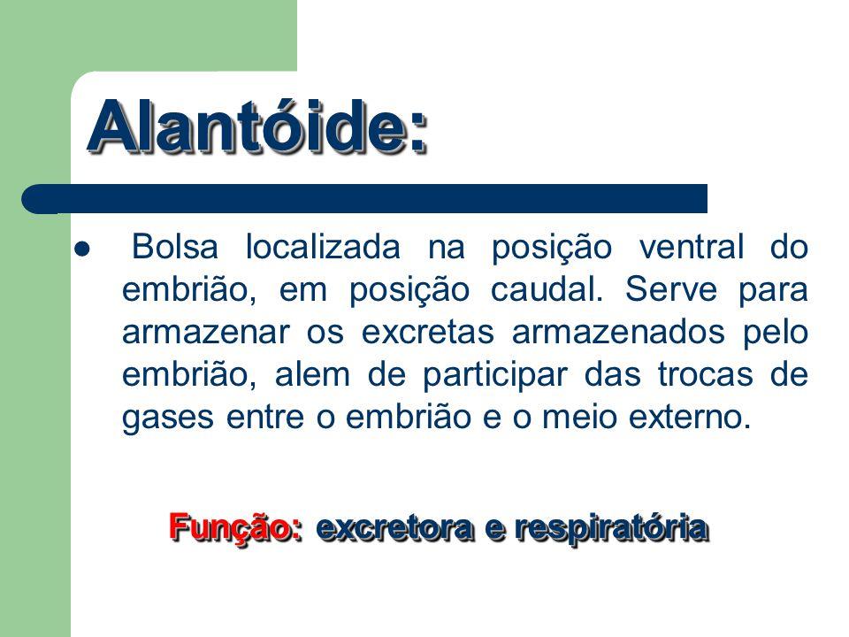 Alantóide:Alantóide: Bolsa localizada na posição ventral do embrião, em posição caudal. Serve para armazenar os excretas armazenados pelo embrião, ale