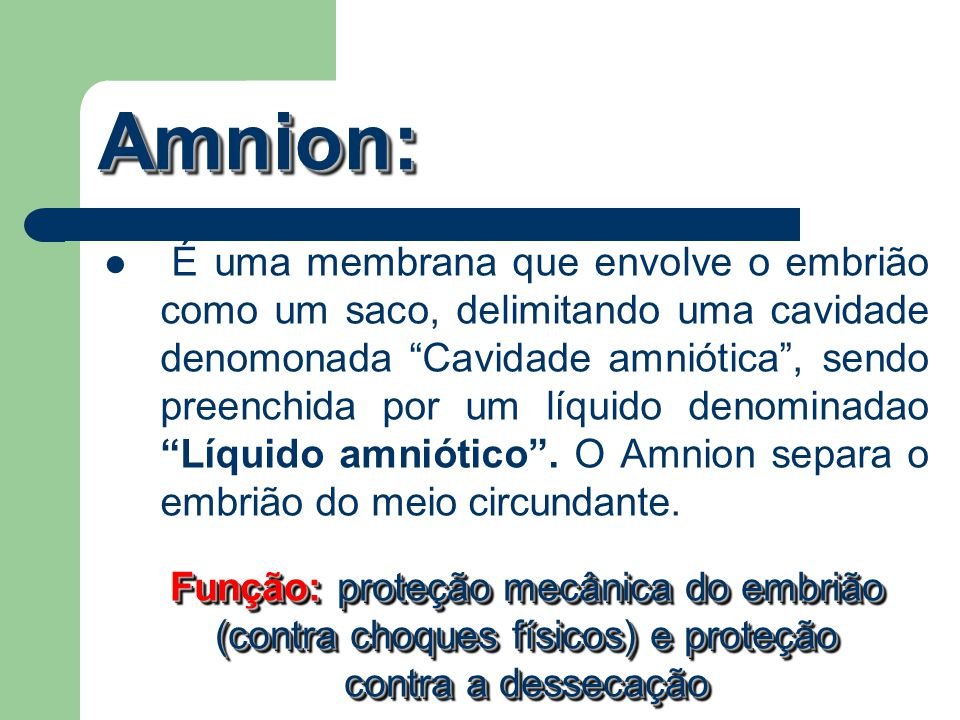 """Amnion:Amnion: É uma membrana que envolve o embrião como um saco, delimitando uma cavidade denomonada """"Cavidade amniótica"""", sendo preenchida por um lí"""