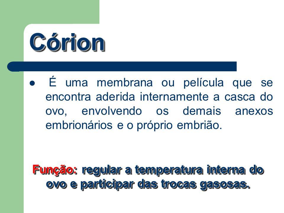CórionCórion É uma membrana ou película que se encontra aderida internamente a casca do ovo, envolvendo os demais anexos embrionários e o próprio embr