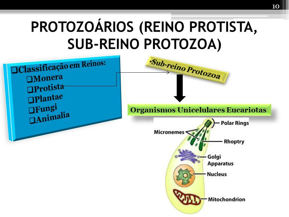 PROTOZOÁRIOS (REINO PROTISTA, SUB-REINO PROTOZOA) Organismos Unicelulares Eucariotas 10