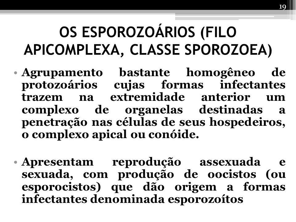 OS ESPOROZOÁRIOS (FILO APICOMPLEXA, CLASSE SPOROZOEA) Agrupamento bastante homogêneo de protozoários cujas formas infectantes trazem na extremidade an