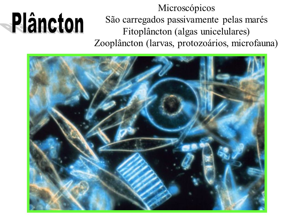 Microscópicos São carregados passivamente pelas marés Fitoplâncton (algas unicelulares) Zooplâncton (larvas, protozoários, microfauna)