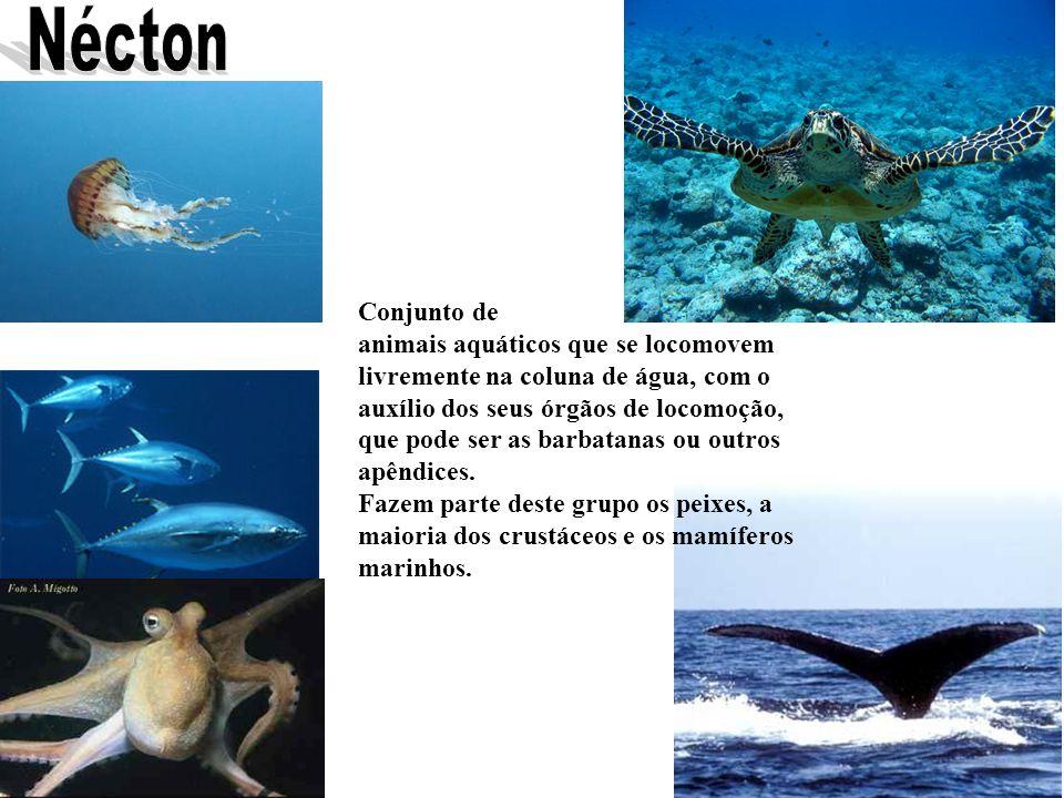 Conjunto de animais aquáticos que se locomovem livremente na coluna de água, com o auxílio dos seus órgãos de locomoção, que pode ser as barbatanas ou