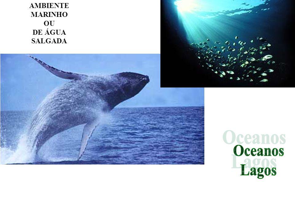 Águas correntes Lóticos Rico em oxigênio e nutrientes devido ao constante movimento das águas.