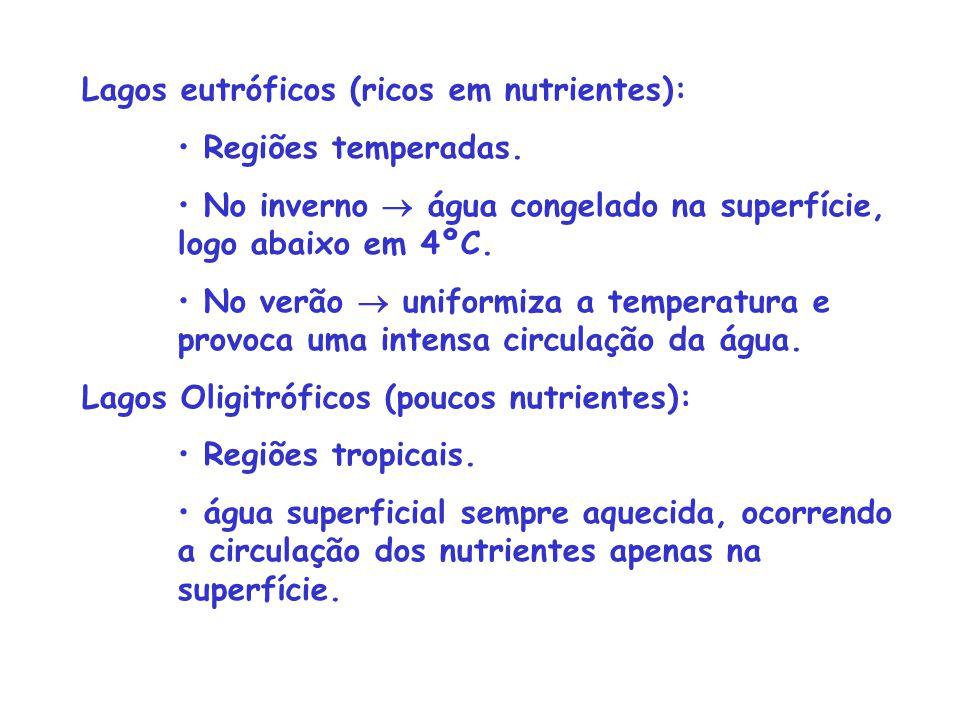 Lagos eutróficos (ricos em nutrientes): Regiões temperadas. No inverno  água congelado na superfície, logo abaixo em 4ºC. No verão  uniformiza a tem