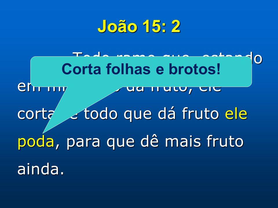 João 15: 2 Todo ramo que, estando em mim, não dá fruto, ele corta; e todo que dá fruto ele poda, para que dê mais fruto ainda. Corta folhas e brotos!