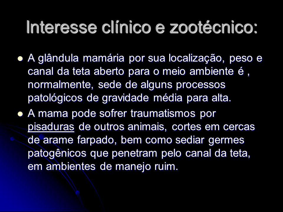 Interesse clínico e zootécnico: A glândula mamária por sua localização, peso e canal da teta aberto para o meio ambiente é, normalmente, sede de algun