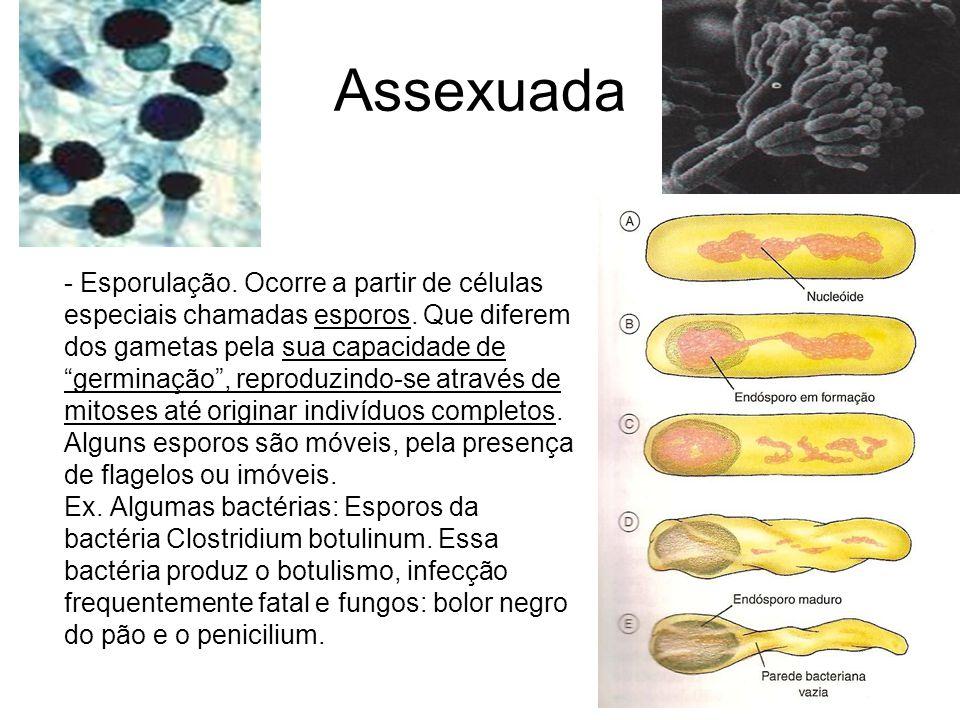 """Assexuada - Esporulação. Ocorre a partir de células especiais chamadas esporos. Que diferem dos gametas pela sua capacidade de """"germinação"""", reproduzi"""