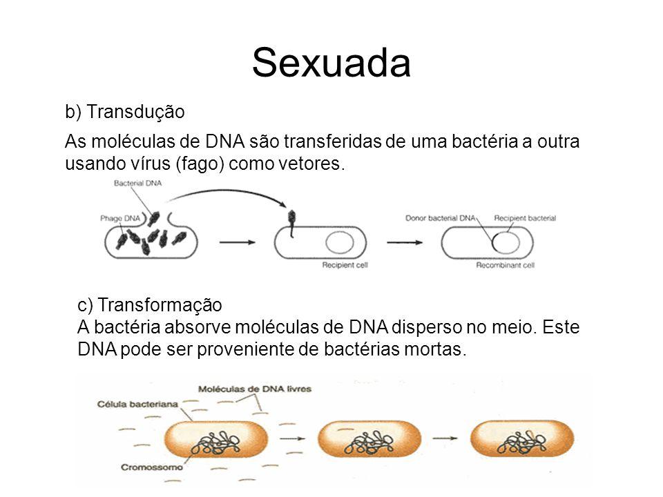 Sexuada b) Transdução As moléculas de DNA são transferidas de uma bactéria a outra usando vírus (fago) como vetores. c) Transformação A bactéria absor