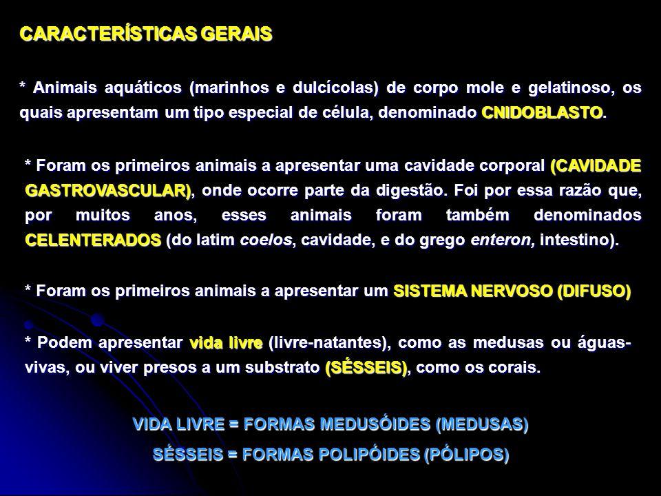 CARACTERÍSTICAS GERAIS * Animais aquáticos (marinhos e dulcícolas) de corpo mole e gelatinoso, os quais apresentam um tipo especial de célula, denominado CNIDOBLASTO.