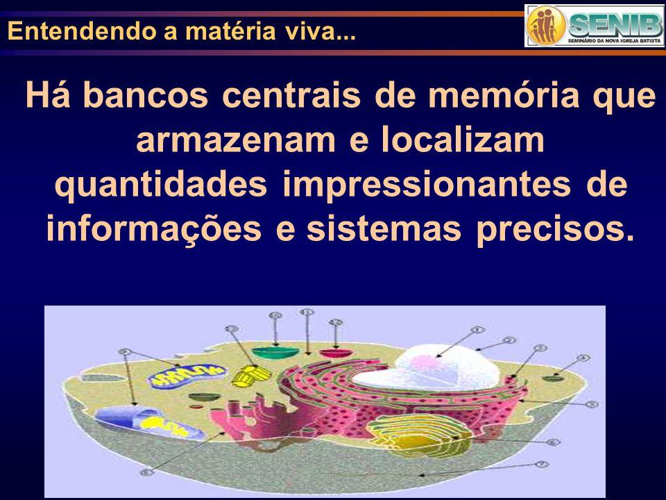 Entendendo a matéria viva... Há bancos centrais de memória que armazenam e localizam quantidades impressionantes de informações e sistemas precisos.