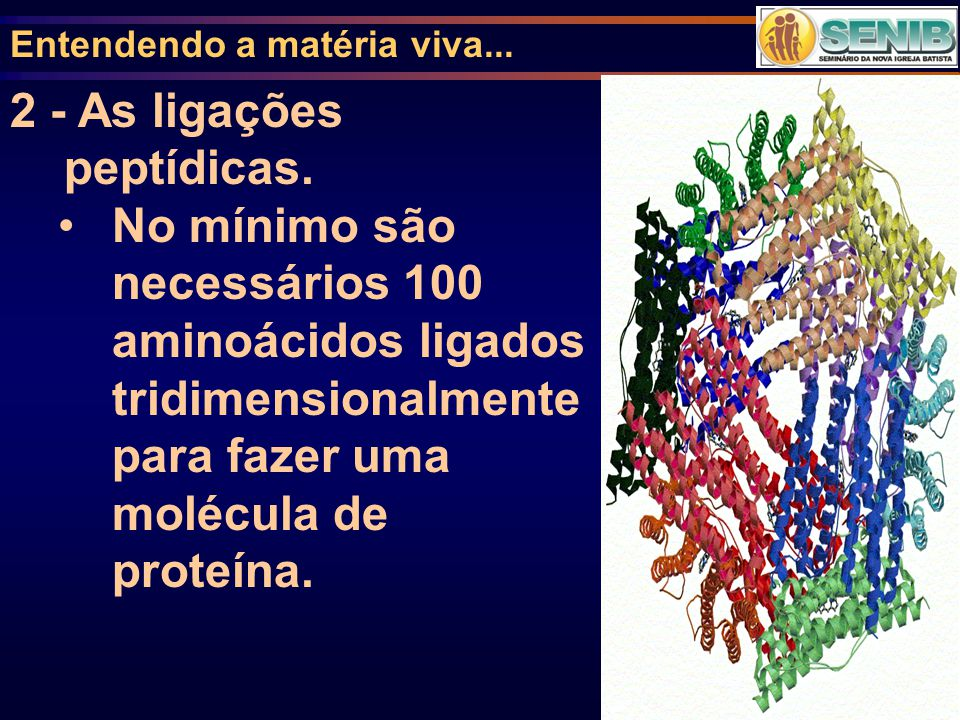 Entendendo a matéria viva... 2 - As ligações peptídicas. No mínimo são necessários 100 aminoácidos ligados tridimensionalmente para fazer uma molécula