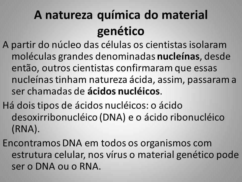 A natureza química do material genético A partir do núcleo das células os cientistas isolaram moléculas grandes denominadas nucleínas, desde então, ou