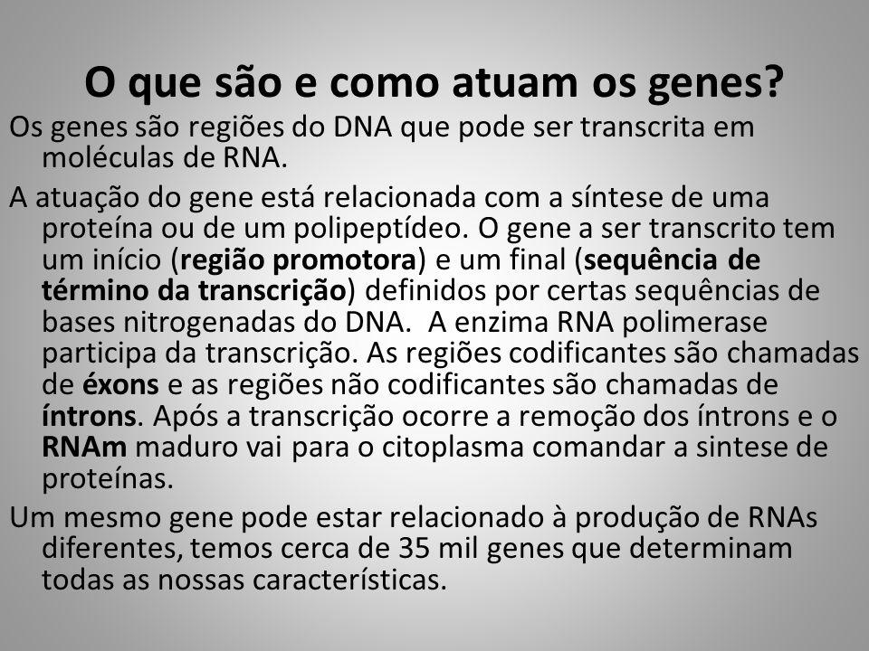 O que são e como atuam os genes? Os genes são regiões do DNA que pode ser transcrita em moléculas de RNA. A atuação do gene está relacionada com a sín