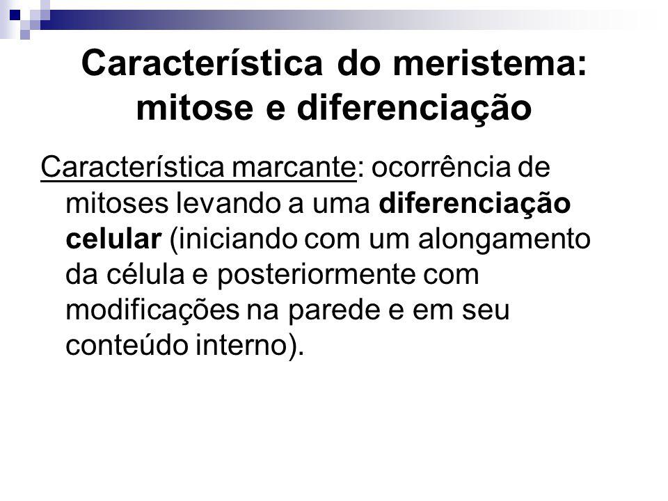 Característica do meristema: mitose e diferenciação Característica marcante: ocorrência de mitoses levando a uma diferenciação celular (iniciando com
