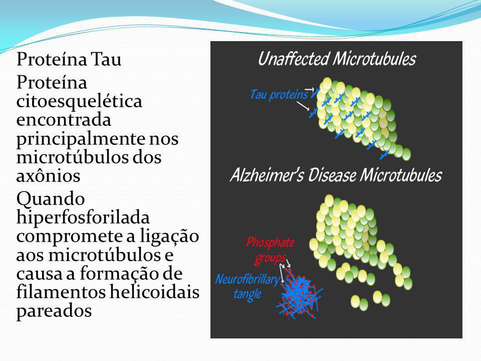 Proteína Tau Proteína citoesquelética encontrada principalmente nos microtúbulos dos axônios Quando hiperfosforilada compromete a ligação aos microtúbulos e causa a formação de filamentos helicoidais pareados