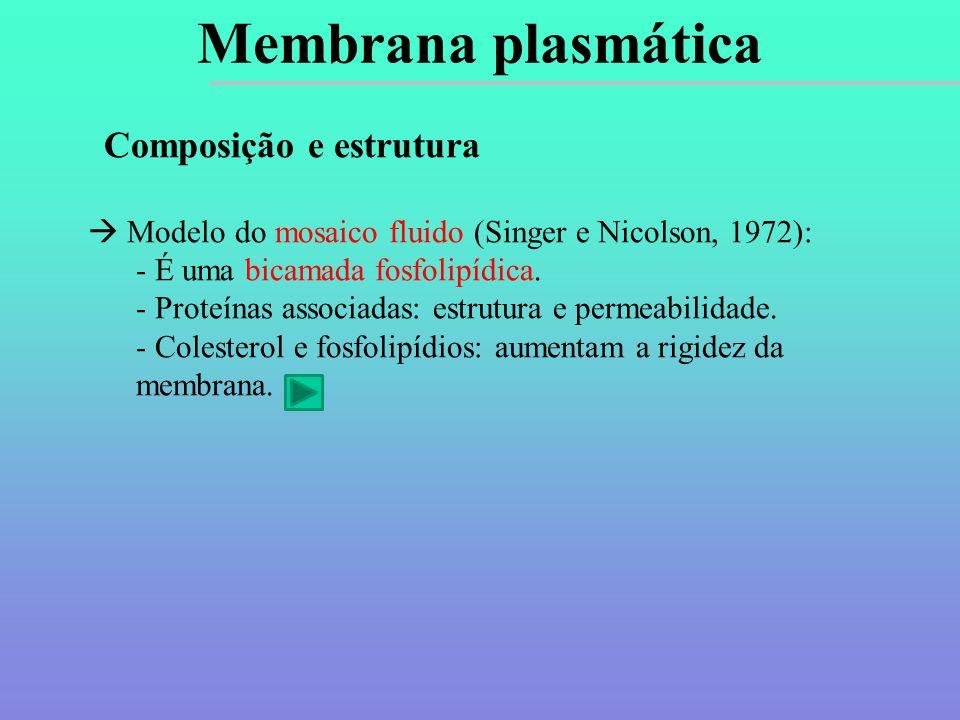 Composição e estrutura  Modelo do mosaico fluido (Singer e Nicolson, 1972): - É uma bicamada fosfolipídica.