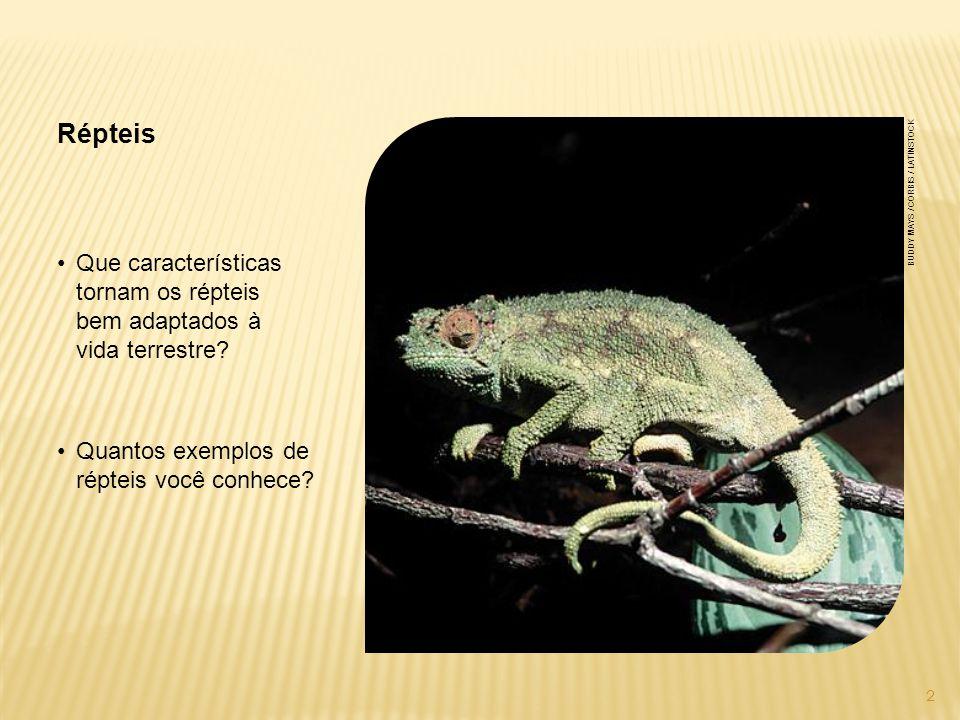 Crocodilianos O corpo deles é alongado e coberto por escamas e placas ósseas.