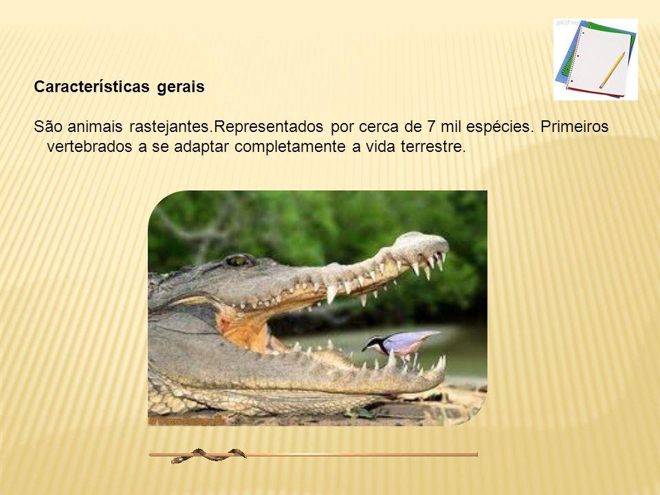A evolução dos répteis Esses répteis ancestrais deram origem aos répteis atuais, às aves e aos mamíferos, e a formas que não existem mais, como os pterossauros.