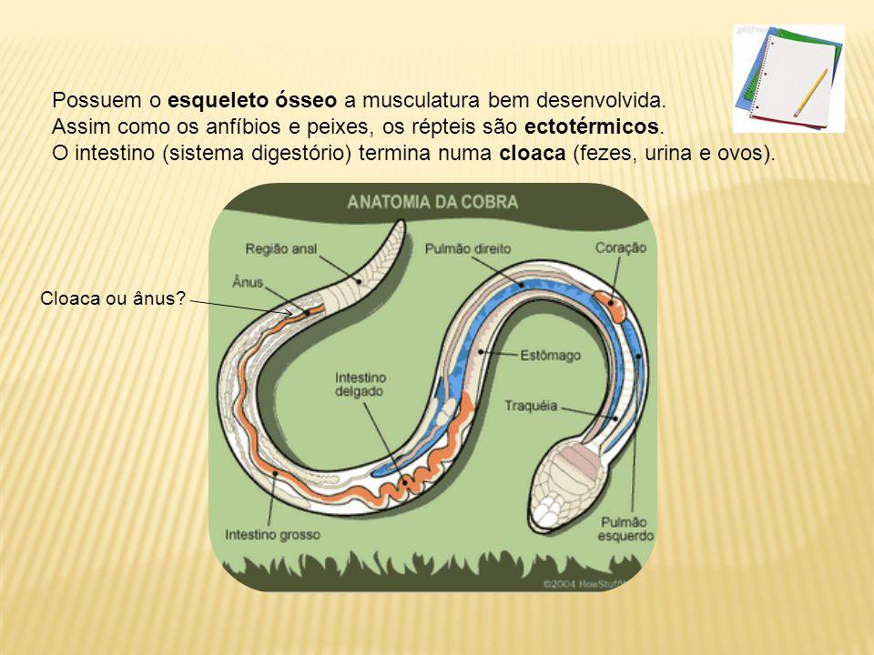 Circulação A circulação dos répteis é semelhante à dos anfíbios: o coração possui dois átrios e um ventrículo parcialmente dividido e impulsiona sangue para os pulmões e para o corpo (exceção dos jacarés).